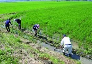 きっと、お米がもっと好きになる。絶滅の危機を救った『朱鷺と暮らす郷』のこと