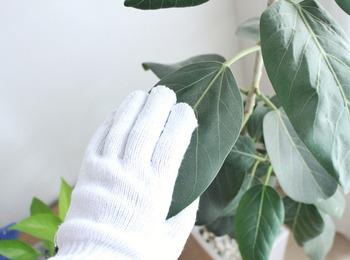 ついつい忘れがちな観葉植物も、ぜひ丁寧にお掃除を・・・。  秋冬は気温も下がり、植物もお休みモードに突入しますが、春に向けてエネルギーを貯めこむ時期でもあります。日が短くなる中でも、しっかり日光を浴びてチャージしてもらえるように、葉の埃を取ってあげましょう。  軍手を濡らして拭けば、簡単に見違えるようなピカピカの葉っぱになりますよ♪
