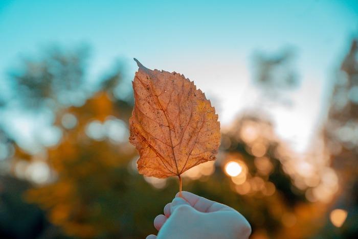 そこで最近ひそかなトレンドになっているのが、「秋から始める小掃除」。  本格的に寒くなる前の今の季節から、少しずついろいろな場所をいつもより丁寧にお掃除して、年末までに家中の汚れをスッキリさせる!というお掃除術なんですよ。  実は早めにコツコツと進めておくのが吉。秋掃除のアドバイス&テクニックを分かりやすく纏めましたので、ぜひ参考にしてみてくださいね。