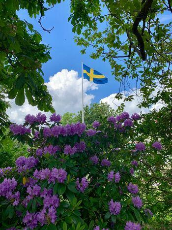 """スウェーデン映画を観たことがありますか?""""北欧映画""""とひとくくりにしてしまいがちなスウェーデン映画ですが、愛おしく魅力的な作品がたくさん存在します。"""