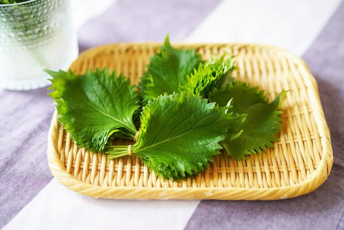 爽やかな香りで料理を引き立てる「大葉」も、朝ごはんやお弁当に欠かせない食材ですよね。大葉は瓶やコップの底に水で濡らしたキッチンペーパーを敷き、茎の切り口がキッチンペーパーに触れるように立てて蓋やラップをして保存しておくと鮮度を保ちやすくなります。保存している途中で茎の切り口が茶色くなった場合には、その部分を切り落として保存しておくと2週間ぐらい日持ちするそうですよ◎。