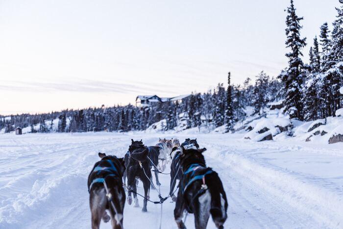 テレビの映像でしか見たことがない犬ぞりも、雄大な自然の残る北海道なら体験できます。のんびりと進むイメージがありますが、乗ってみると犬たちのスピード感にびっくり!犬の走る音だけが聞こえる、リフレッシュできる体験です。