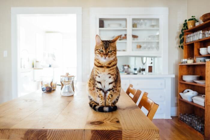 """大好きな""""あの子""""といつも一緒に♪大人可愛い【猫モチーフ】アイテム"""
