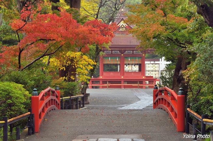 鎌倉駅からも近い鶴岡八幡宮は、紅葉が楽しめるスポットとして有名です。見頃は11月後半あたり。境内が広いので源氏池に映り込む紅葉や、階段を上って段葛や海と紅葉を俯瞰で楽しむのもおすすめです。今年は境内に「鎌倉文華館 鶴岡ミュージアム」もできました。紅葉見物を兼ねて是非足を運んでみてくださいね。