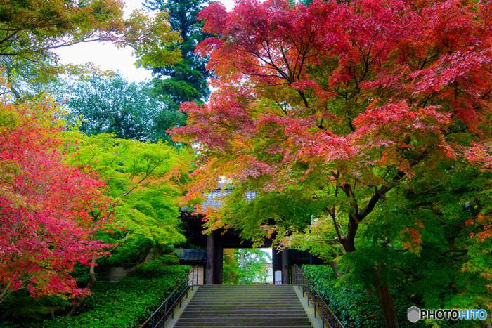 北鎌倉駅の紅葉を代表する圧倒的存在の「円覚寺」。北鎌倉エリアは円窓と紫陽花でお馴染みの明月院をはじめ東慶寺など見所満載。古民家カフェも多いのでのんびり過ごしたい方にはおすすめのエリアになります。
