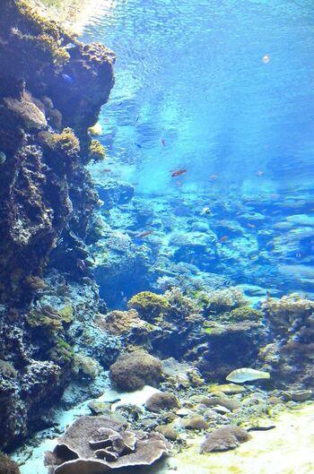 海から汲み上げた海水をふんだんに水槽に取り入れている美ら海水族館。沖縄の海を体感できる空間では、海の生き物たちに今にも手が届きそうな臨場感が楽しめます。