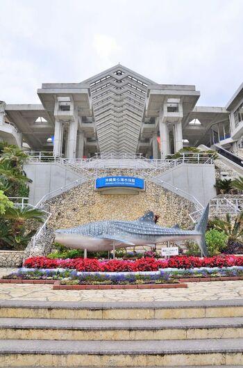 沖縄の海を全身で体感できる空間。都心の那覇からは少し離れた場所にありますが、わざわざでも訪れたい感動がいっぱいの水族館です。