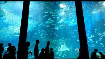 きっと、力強く生きる海の生き物たちが何か大切なモノを思い出させてくれるはず。あなたもぜひ、九州・沖縄の魅力的な水族館をめぐってみませんか。