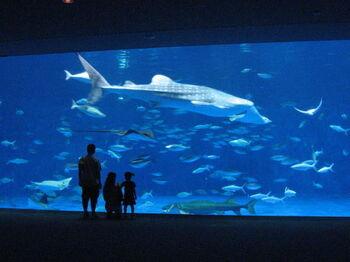 「黒潮浪漫街道」をコンセプトに、鹿児島の海の生きものを中心に約500種3万点を飼育する「いおワールドかごしま水族館」。