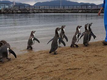 土日祝日には、人気の「ペンギンのお散歩」も見られます。約20分間の楽しい時間、予定を合わせて見に行ってみてはいかがでしょうか。
