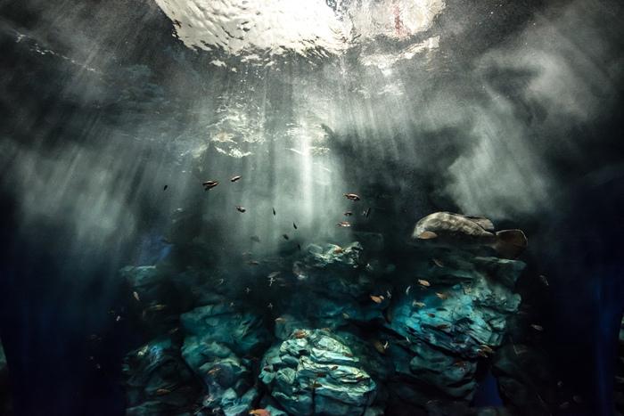 海に住む生き物たちの世界を自然に近いかたちで表現した水槽は、どれも見ごたえのあるものばかり。特に筆者がおすすめしたいのが、足元から天井まで広がる「玄界灘水槽」です。自分も海の中にいるような不思議な気持ちになれる場所。  大水槽と言えば青い空間を思い浮かべますが、こちらは黒と緑が混ざったような幻想的な色合いが特徴です。波にもまれる力強い魚たちの様子は、いつまで見ていても飽きません。