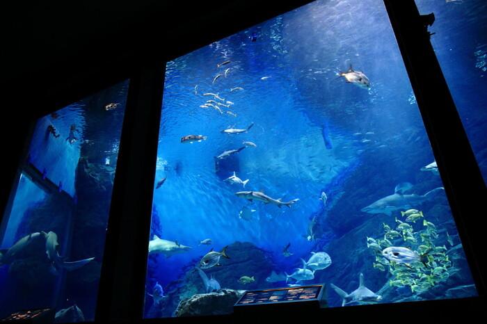 「九州の海」をテーマに、海の生き物を身近に感じられる工夫がいっぱいの「マリンワールド海の中道」。ひとつひとつの水槽にテーマがあり、九州の海、そして自然を存分に感じられます。