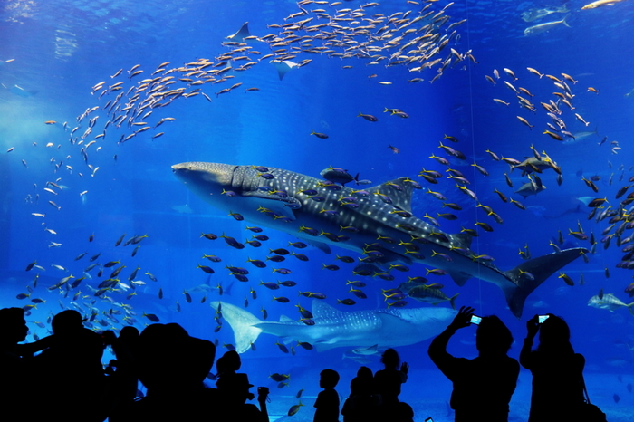 天候に左右されず、世代を問わず楽しめるレジャースポット「水族館」。一歩足を踏み入れると、そこは海の生き物たちの世界。まるで海のなかにいるような幻想的な空間が広がっています。  海に囲まれた九州・沖縄には、規模の大小にかかわらず特徴のある素敵な水族館がたくさんあります。今回は、そのなかでも特におすすめしたい九州・沖縄の水族館をご紹介します。