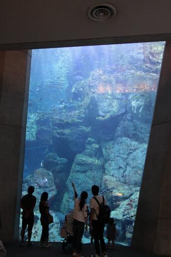 コンパクトな館内ながら、見て、聞いて、さわって楽しめる工夫が随所に感じられる素敵な水族館。飼育している方たちの愛情が伝わってくるようです。  多彩な水槽で立ち止まり、ひとつひとつの海の生き物と対話するようにじっくりと観察してみてはいかがでしょうか。