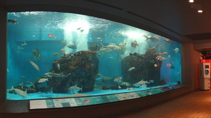 子どもたちに、「自然と人の共生」について考えるきっかけづくりの場となって欲しい、との願いを込めてつくられた「長崎ペンギン水族館」。ペンギン以外にも、長崎近海に住む魚や昆虫、植物なども展示されています。