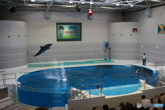 広々としたショープールでは、イルカへの知識が深められる楽しいショーが繰り広げられます。