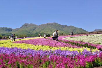 大分県竹田市に位置する、阿蘇国立公園内の「久住高原」。その高原の丘に広がるとっておきのお花畑エリアが、「くじゅう花公園」です。  春はチューリップ、夏はラベンダーやひまわり、秋はコスモスと、四季折々の花を観賞できますよ。  公園からさらに5分くらい車を走らせれば、美味しい牛乳で名高い、ガンジー牧場へ行くことも◎