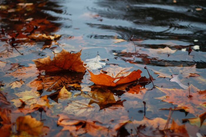 観光シーズンにぴったりな秋の北ヨーロッパですが、一つ残念なことが季節の変わり目ということもあり、天候が安定しないこと。しかし、日本の梅雨のように1日中降り続くなんてことはほとんどなく、1日に1〜2回30分程度降る程度ということがほとんどです。そのためちょっと雨宿りをしたり、カフェで休憩を挟むのにもぴったりです!