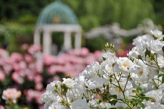 バラ園の中は「大アーチ」や「散策の森」、「由美のガゼボとエデンの鐘」など、様々なコンセプトのもとバラが植えられています。「由美のガゼボとエデンの鐘」には素敵な大理石の建築物が建てられており、京成バラ園で結婚式を挙げる際にはメインステージにもなります。バラに囲まれた結婚式という夢のような舞台が実現できますよ。