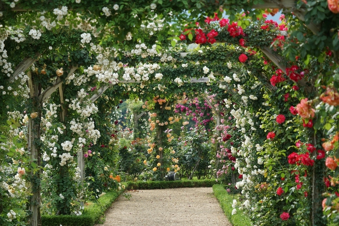 見て回る箇所全てが美しいお庭の散策の一休みには、園内のカフェが便利です。カフェでは、香り豊かな「バラソフトクリーム」や、美容効果も期待できる「バラジュース」が楽しめます。「プレミアムスパークリングローズ」はお土産にも大変おすすめです。様々なイベントや調香体験なども人気がある、一度は訪れたいバラ園です。