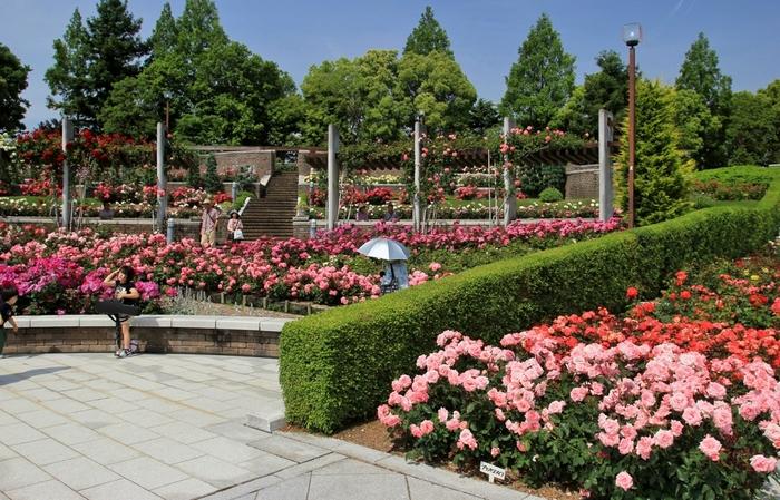 荒牧バラ公園は、兵庫県の伊丹市荒牧にある、1.7ヘクタールの広大なバラ園です。高低差のある立地を生かした植え込みと、アンティーク感のある建造物とのコラボレーションは、大変美しい風景を生み出しています。