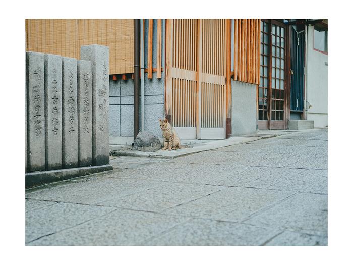 Leica M10+ SUMMICRON-M F2.0/50mm 難波 -大阪 2019