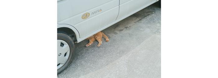 【連載】写日好日 ―レンズの向こうに―  vol.9『街と猫』
