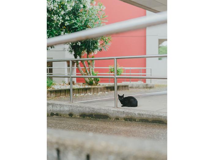 D600+ AF-S NIKKOR 50mm f/1.8G 瑞江 -東京 2017