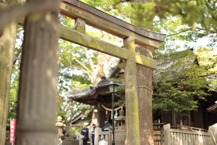 秋には立派なイチョウで黄金色になる境内。「亀岡八幡宮」は逗子駅から徒歩すぐの場所にある、訪れやすい観光地です。