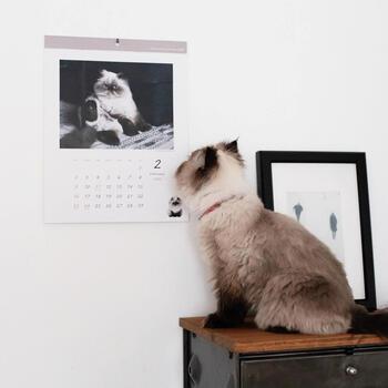 こちらは、愛猫をカレンダーに仕上げた作品。ペットの写真入りカレンダーも、離れて暮らす家族へのプレゼントとしておすすめですよ♪  壁掛けカレンダーの留め方ですが、そのまま壁にとめるのが代表的。白い壁に白い用紙なら、このように馴染みやすく美しいですね。