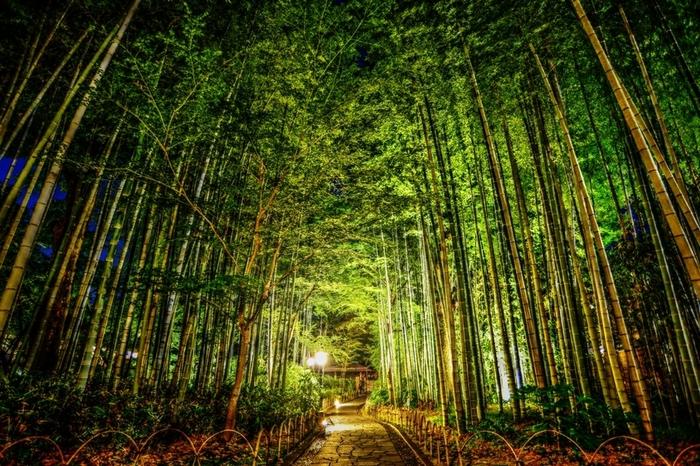 そんな修善寺温泉周辺は、別名「伊豆の小京都」とも呼ばれており、落ち着いた雰囲気に包まれています。昔ながらの趣ある旅館に、人気の散策スポット「竹林の小怪(ちくりんのこみち)」、静かな街を彩る鮮やかな朱色の橋。この雰囲気が好きで修善寺温泉を訪れる人も多いようです。