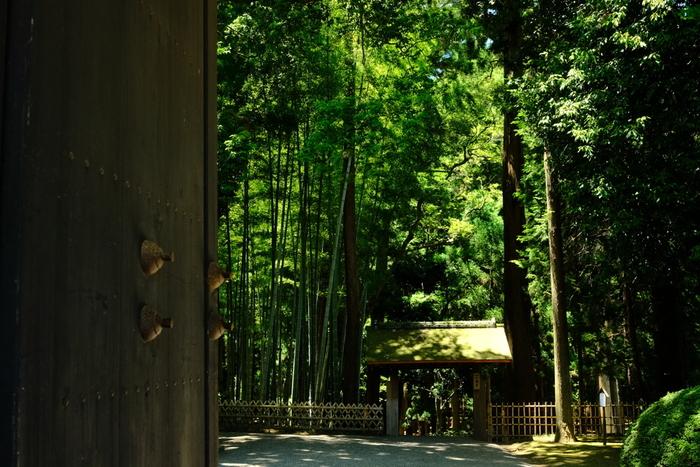 茨城県水戸市の偕楽園は、天保13年(1842年)の7月に、水戸藩第9代藩主である徳川斉昭公により、領民の休養場所として開園されたのが始まりです。