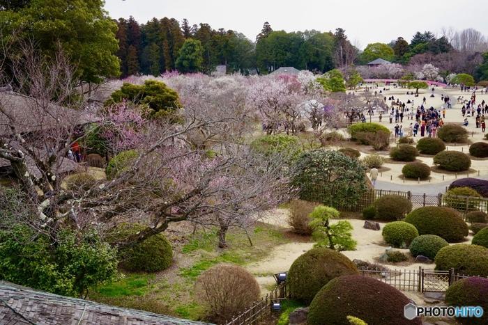 約300ヘクタール(東京ドーム約64個分)もあり、ニューヨーク市のセントラルパークに次いで、都市公園としては世界第2位の面積を誇ります。