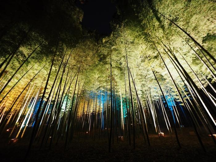 偕楽園内北西部に位置する数千本の孟宗竹(モウソウチク)の光景が圧巻の孟宗竹林。梅まつりなどが開催されている機関はライトアップもあり、梅だけでなく竹林の一部もライトアップされ、日中の清々しい雰囲気とはまた違った幽玄な雰囲気に。