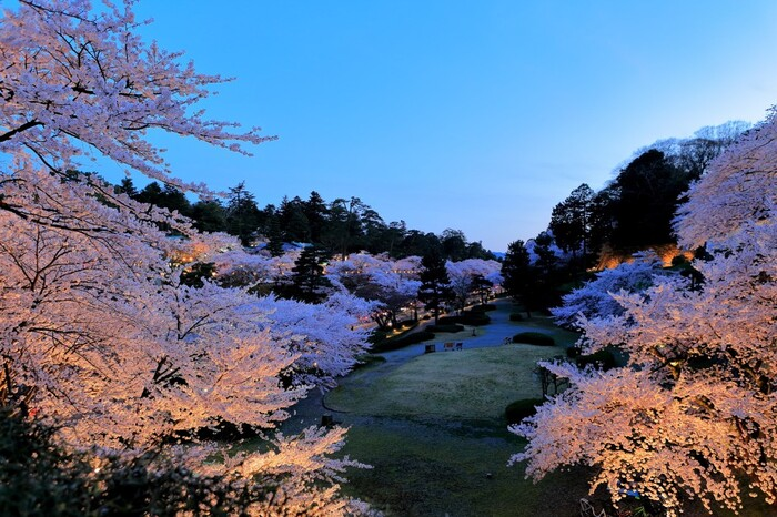 前述したように日本さくら名所100選に選ばれている兼六園。桜の時期はライトアップもされるので、昼間の観光だけでなく、夜の観光も計画に入れておくと風情ある光景に出会えます。
