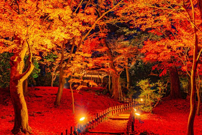 名園の魅力を存分に堪能できる紅葉シーズン。兼六園は秋〜冬にかけて雪吊りの作業も行われ、日々光景が変化してゆく様も楽しめます。そして夜は紅葉の幻想的なライトアップも♪