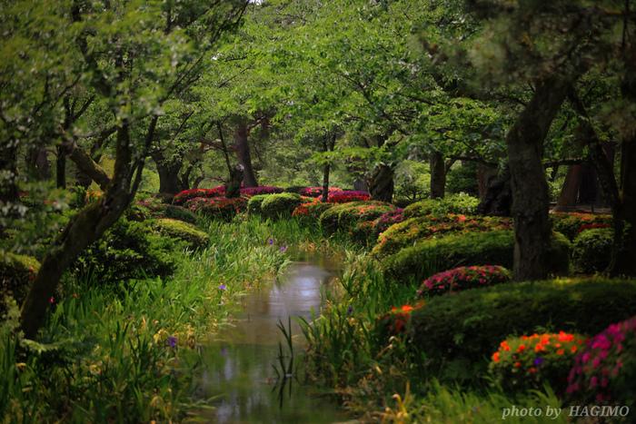 新緑の兼六園もさわやかな空気に包まれ、カキツバタやツツジなどの美しい花と緑のコントラストが絵になります。