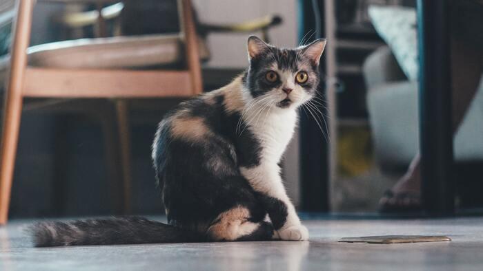 猫だって大切な家族。移動中も快適なおすすめ「キャリーバッグ」&選び方