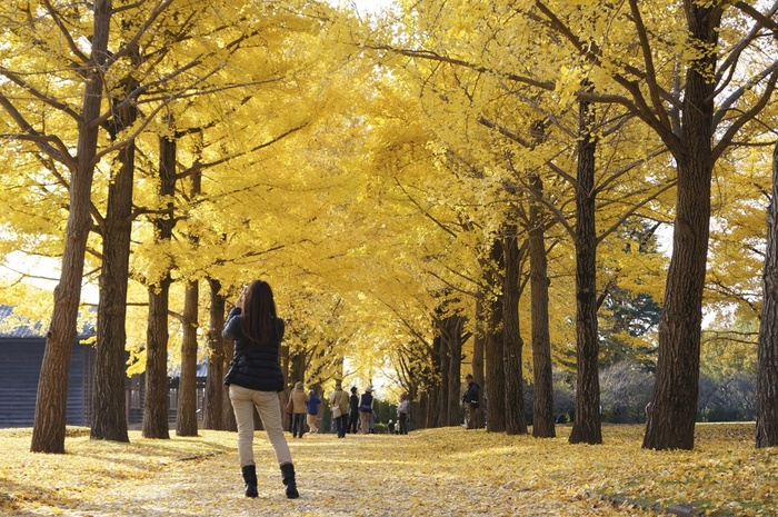 大人になった今こそ訪れたい【日本三大名園】で過ごす至福の休日