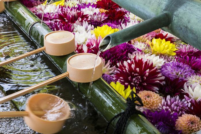 「岡寺」は花の寺として知られ、毎年4月中旬~5月上旬にかけて石楠花まつりが行われたり、5月のGW頃には境内の池や手水舎にダリアが浮かべられるなど、満開の時期にはいたる所で参拝者を楽しませてくれます。