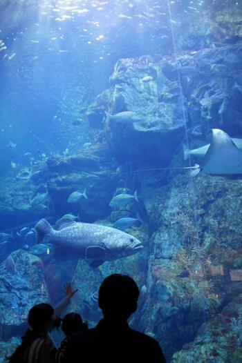 多彩な水槽をひとつひとつ丁寧に見ていけば、お子さんと一緒にお魚博士になれるかも。好きな魚、面白かった魚など話し合うのも楽しいですね。