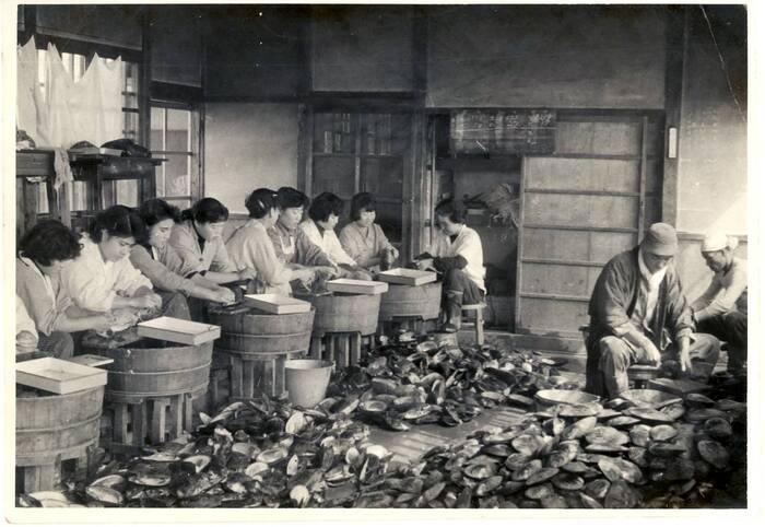 昭和31年の浜上げ(収穫)の様子。「無核真珠」の技術が確立された当時の活気が感じられる(写真:池蝶真珠有限会社)