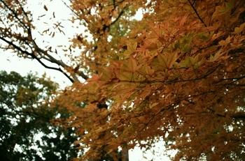 秋にはカエデが見頃ですが、季節ごとのお花を楽しめるので何度訪れてもうれしい発見があります。