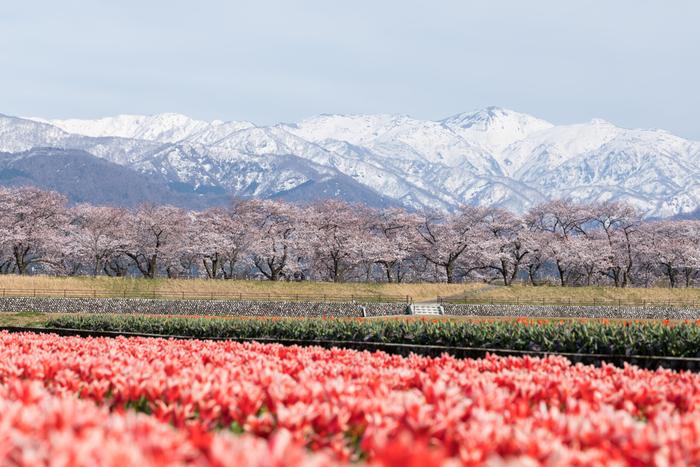 大自然に囲まれて心を満たそう!【富山】のおすすめ温泉地と周辺ガイド