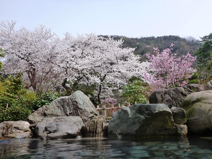 そんな庄川温泉郷には、食事と温泉を楽しむ日帰りプランが充実している旅館がたくさんあります。「ゆめつづり」では、すぐそばまで伸びてくる桜を眺めながら花見風呂が楽しめますよ。「三楽園」にはエステを利用できるプランも!ちょっと贅沢な週末におすすめです。