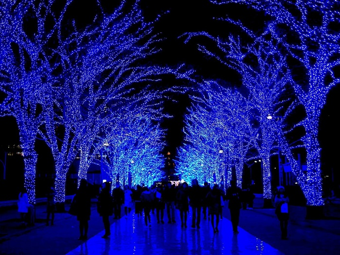 まずは渋谷のイルミネーション「青の洞窟」からご紹介します。その名の通り、LED約60万球が、青い光の洞窟の中にいるような光景を作り出します。渋谷公園通りから代々木公園ケヤキ並木が開催場所となっています。