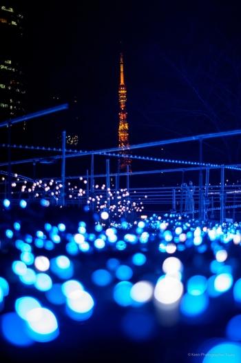 こちらで挑戦したいのが、東京タワーも入れた写真です。イルミネーションの光の中に、東京タワーがとても映えます!
