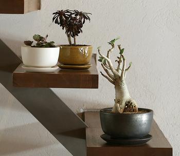 信楽焼きで作られた渋い色合いの鉢です。鉢皿も別売りであるので、セットで使うと上品な印象。個性的な植物もすんなりまとめてくれる力があります。