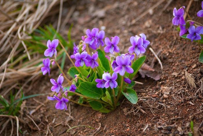 目を引くような華やかさというよりは、可憐でけなげで、草花のようなお花。束にするのも難しく、ドライフラワーにするほど量もない。それでも、その特徴を生かせば十分に楽しむことができます。