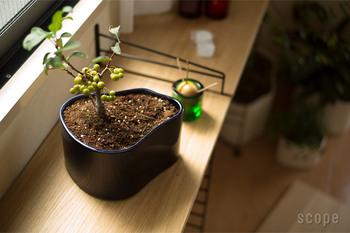 緩やかな曲線が美しく癒されるポットです。下には穴が開いていないので、植物を直接植えるには育て方に工夫が必要です。